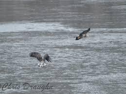 Raven Maps Bald Eagles Of Loch Raven Maps U0026 Notes U2013 Creative Nonfiction 315