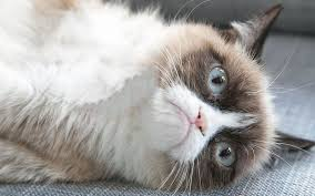 Grumpy Cat Friday Meme - grumpy cat from meme to millionaire business fameable