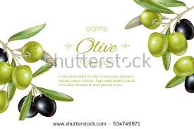 olives stock images royalty free images u0026 vectors shutterstock