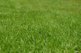 1 lawn maintenance company longwood fl