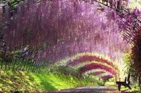 japan flower tunnel the best flower garden in the world life style by modernstork com