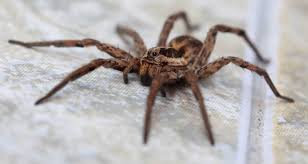 the facts about what spiders eat terminix