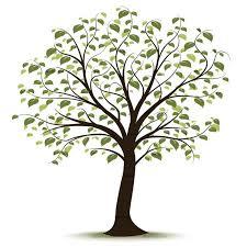 best 25 tree clipart ideas on clipart felt