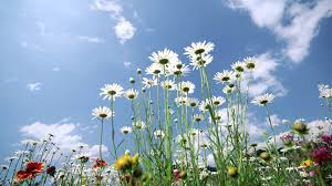 Flower Pictures Ilya Malyuev Sunshine Flowers Youtube