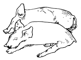 coloring elegant pigs coloring pages cute pig print