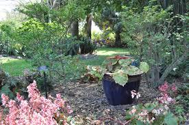 riverbanks botanical garden begonia garden mounts botanical garden of palm beach