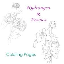 hydrangea and peonies coloring pages