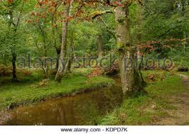 blackwater rhinefield ornamental drive the new forest stock photo