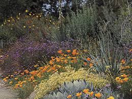 download california native plants for the garden solidaria garden