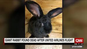 three foot dies after united flight cnn