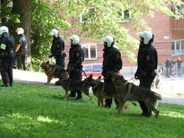 belgian shepherd vs rottweiler police dog wikipedia