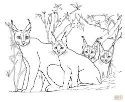 caracal kittens and mother coloring page free printable coloring