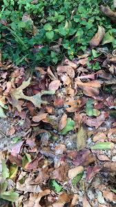 fall leaves wardrobe autumn dedra davis writes