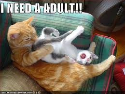 I Need An Adult Meme - image 171008 i need an adult know your meme