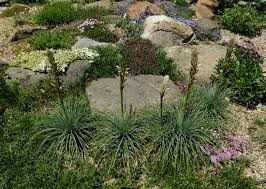 Scottish Rock Garden Forum Wrightman Alpines Nursery Hello To A New Adventure