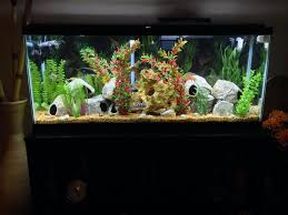 55 gallon aquarium light 55 gallon african cichlid aquarium tanks and ponds pinterest