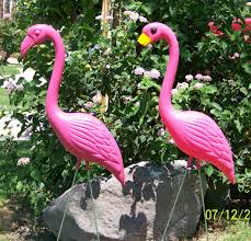 pink lawn flamingos the pink flamingo