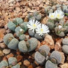 garden design garden design with small rock garden design ideas
