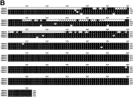ap hp si e cloning and characterization of zebrafish smad2 smad3 and smad4