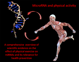 micrornas and physical activity atlas of science