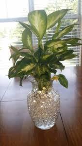 indoor plants images water beads ideas for home indoor plants 37 decomg