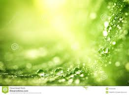 Free Green Beautiful Green Leaf With Drops Of Water Stock Photo Image 44532299