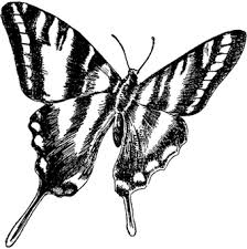butterfly symbol religionfacts