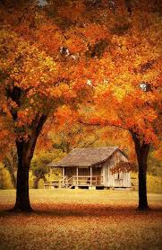photography pretty red comfy cold beautiful gorgeous trees orange