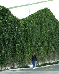 Living Trellis Wall Ideas Living Wall Systems Living Wall Systems Nz Living