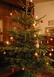 did you know christmas trees originated from germany did you