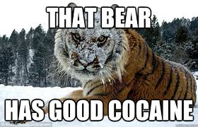 Coke Memes - cocaine memes 28 images welcome to memespp com cocaine meme