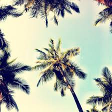 Palm Tree Wallpaper Most Popular Archives