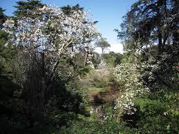 Magnolia Conservation At The San Francisco Botanical Garden Bay Nature
