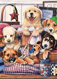 cat and dog were neighbors artist jenny newland discussion on