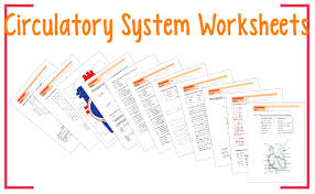 worksheets circulatory system youtube