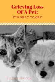 grieving loss of pet grieving loss of a pet it s okay to cry fully feline