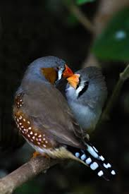 467 best birds images on pinterest beautiful birds animals and