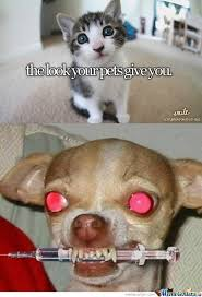 Cute Pet Memes - just cute pets by soonjihan meme center