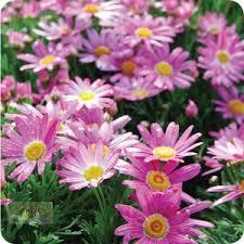 31 best flourishing pinks we love images on pinterest flower