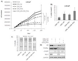 ijms free full text enhanced inhibition of prostate tumor