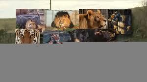 Colorado wild animals images Colorado wild animal sanctuary euthanizes all its animals jpg