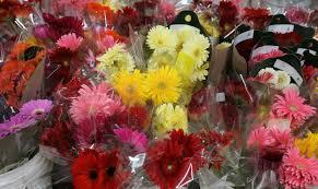 Fresh Cut Flowers Gassafy Home