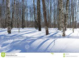 shadows of trees on white snow in the winter park stock image