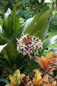 623 best tropical gardens images on pinterest tropical plants