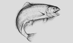 digital fish drawing ben sinclair art