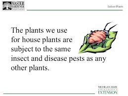 House Plants Diseases - master gardener volunteer training program ppt download