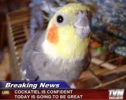 Meme Bird - collection of birds and bird memes album on imgur