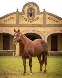 quarter horses king ranch