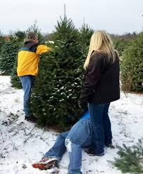 tips for success with your real tree msu extension