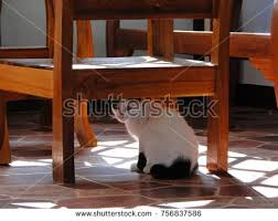 Cat Under Chair Dog Cat Chair Stock Images Royalty Free Images U0026 Vectors